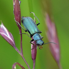 Empingham Beetles
