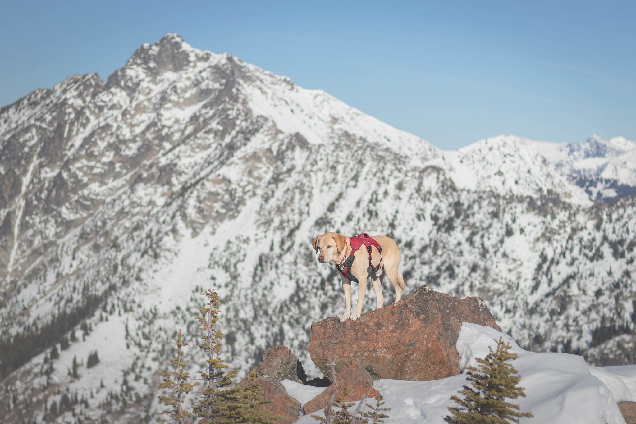 Summit dogs on Tucquala Peak