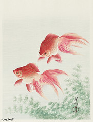 Two veil goldfish (1926) by Ohara Koson (1877-1945). Original from The Rijksmuseum. Digitally enhanced by rawpixel.