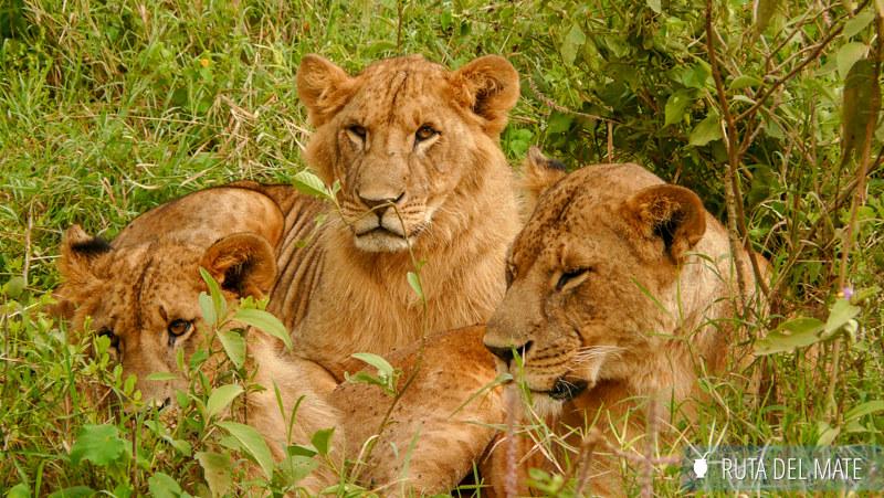 Guia para viajar a Kenia y Tanzania P1130626