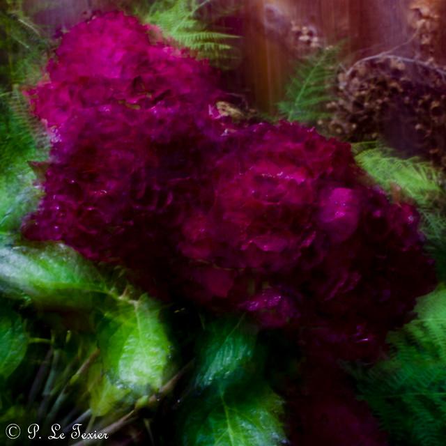 Rêverie florale 018, Nikon D7000, AF-S DX Micro Nikkor 40mm f/2.8G
