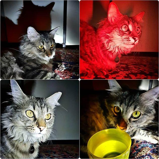 Cat and light #cat #pet #animal #family #home #play #fun #eyes #love #light #red #yellow #dark #relax #grigiomahlertontolomeo #night #funny #4linkedin #funny #cute #animallovers #pets #petsofinstagram #petstagram #ilovemycat #bellobelloinmodoassurdo