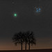 46P/Wirtanen setting behind Trees by Austronomer76