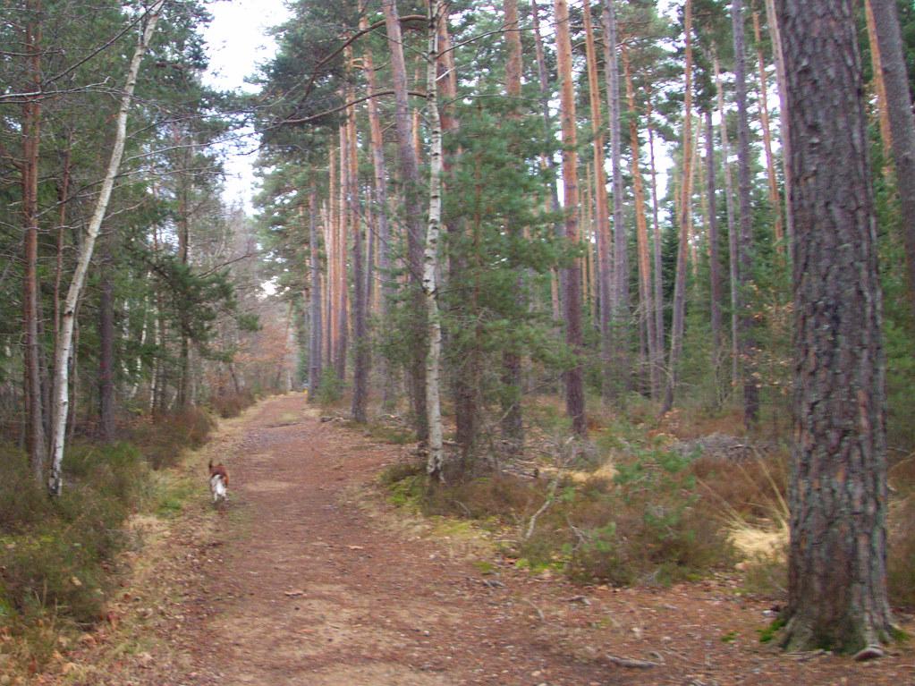 Au bois du Pirou