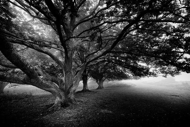 Creepy Tree II, Fujifilm X-T1, XF10-24mmF4 R OIS