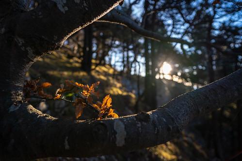 Blätter die nicht fallen
