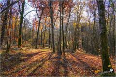 Forêt d'automne en Châtillonnais