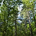 Notton Wood Nature Reserve (85)