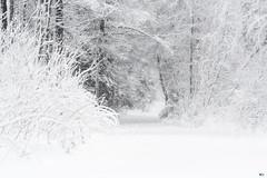 ''Sentier de neige!''
