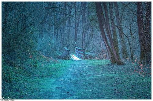 Der Waldweg / The forest path