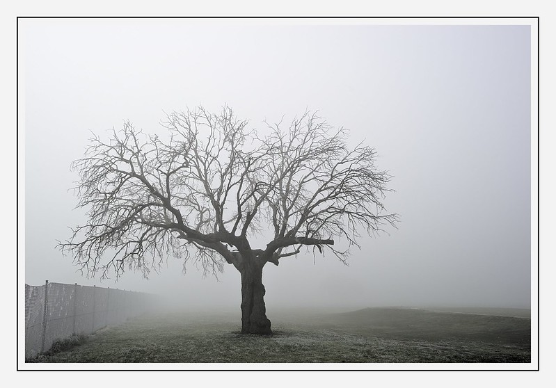 Días de nieblas 46706078871_81b0ce2be7_c