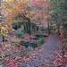 Autumn at the Leasowes