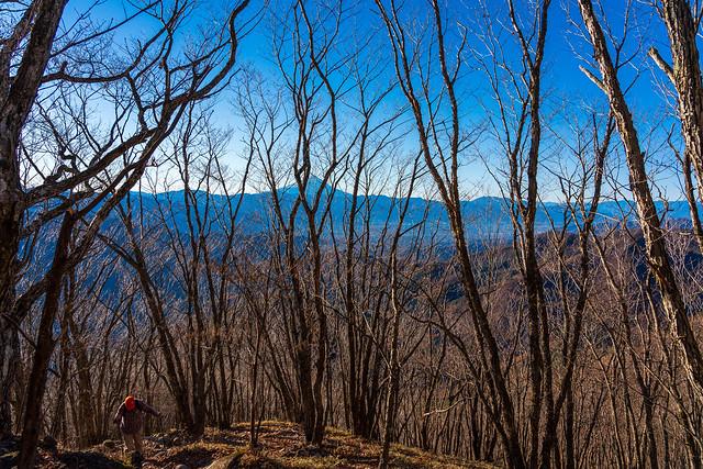 背後には木々間の富士山