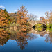 Central Park Pond Autumn (20181110-DSC03105)