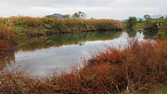 Pond along Yasugawa Athletic Park