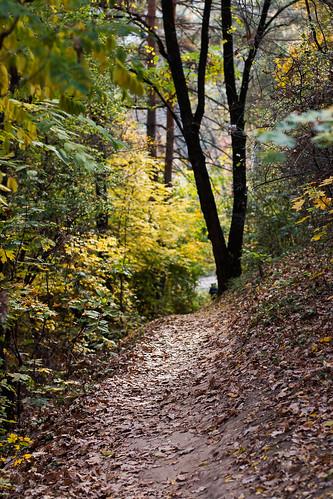 autumn path forest poltava ukraine travel nature