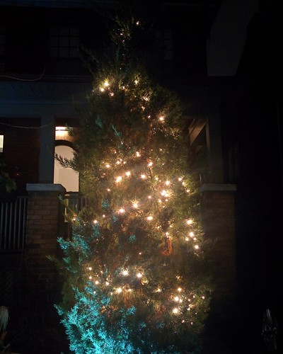 Tree illuminated #toronto #pacificave #highparknorth #christmas #decorations #lights #tree