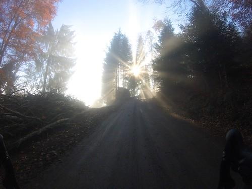 Dem Lichte entgegen