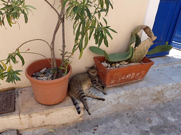chat entre deux fauteuils