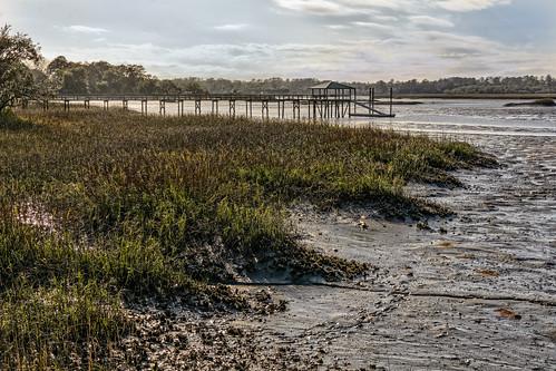 plant structure water dock grass marsh pier wetland