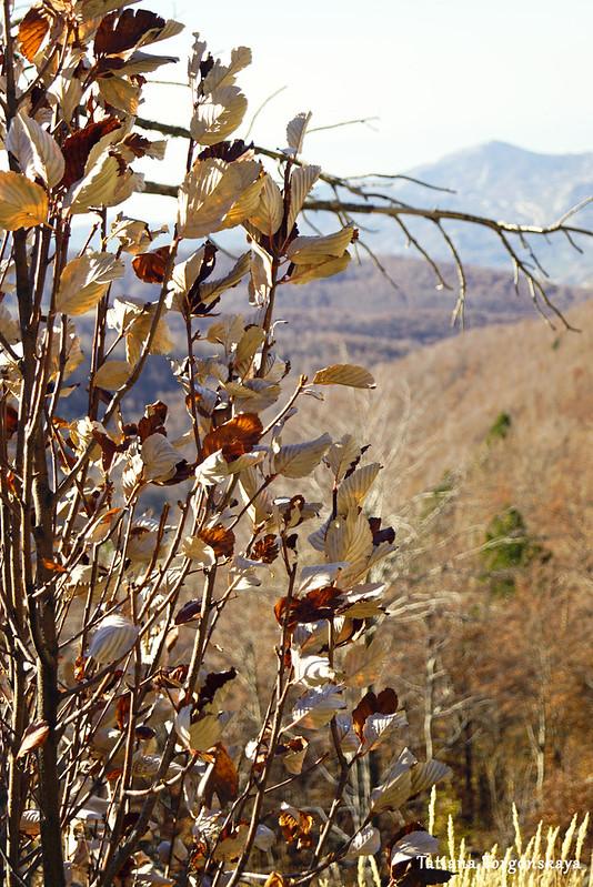 Дерево с высохшими листьями