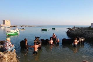 Mule Sant'Oronzo 2018 (5)