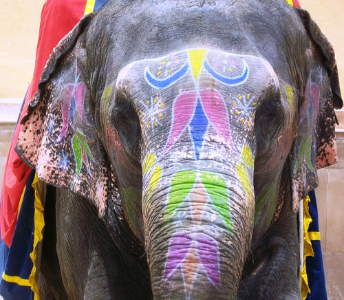 elephant. From an exceprt from Only in India: Adventures of an International Educator