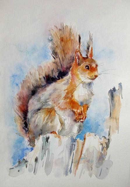 Un autre petit écureuil, Canon IXUS 170