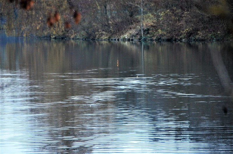 River Aare Water Ripples 28.11.2018