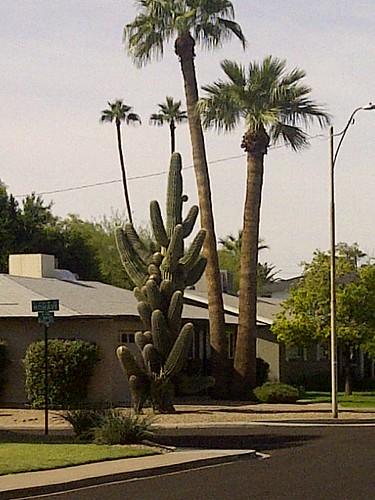 Scottsdale-20181104-08396