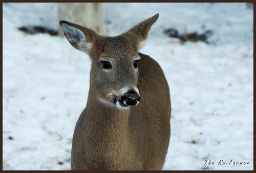 2018-12.deer.solo.2