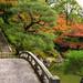 Autumn garden by Tim Ravenscroft