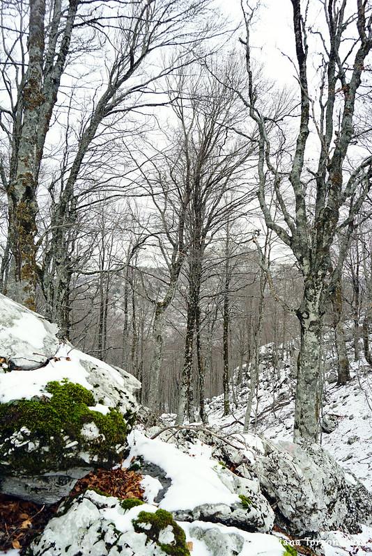 Зима в буковом лесу