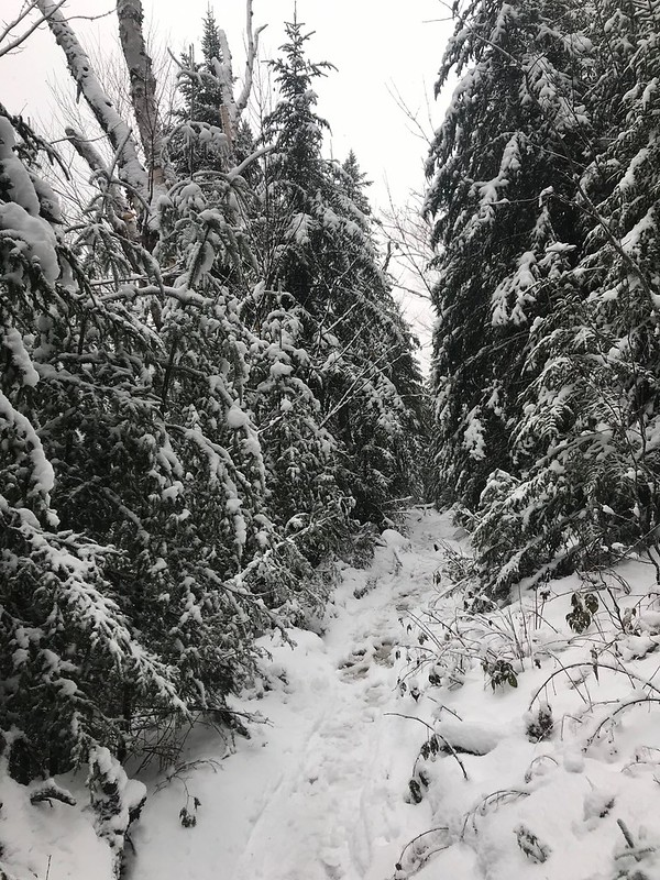 Mini Mt Marcy: Is this the trail?