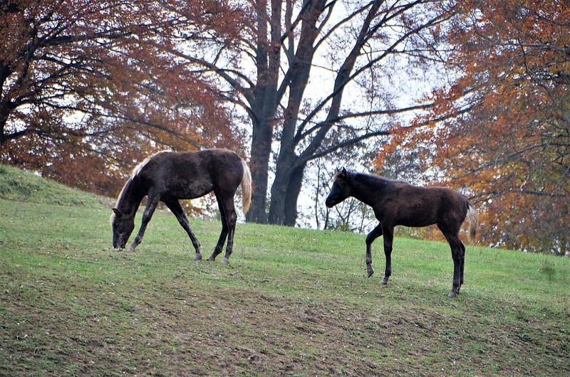 Horses 10.11 (2)
