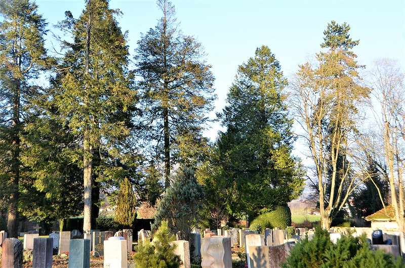 Solothurn cemetery 12.12 (1)