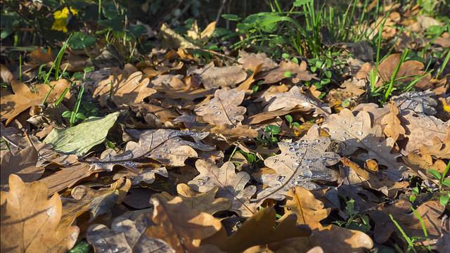 autumn scene 14112018 056 Pano