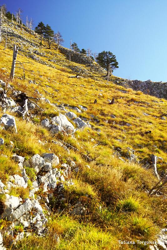Склон горы с желтой травой