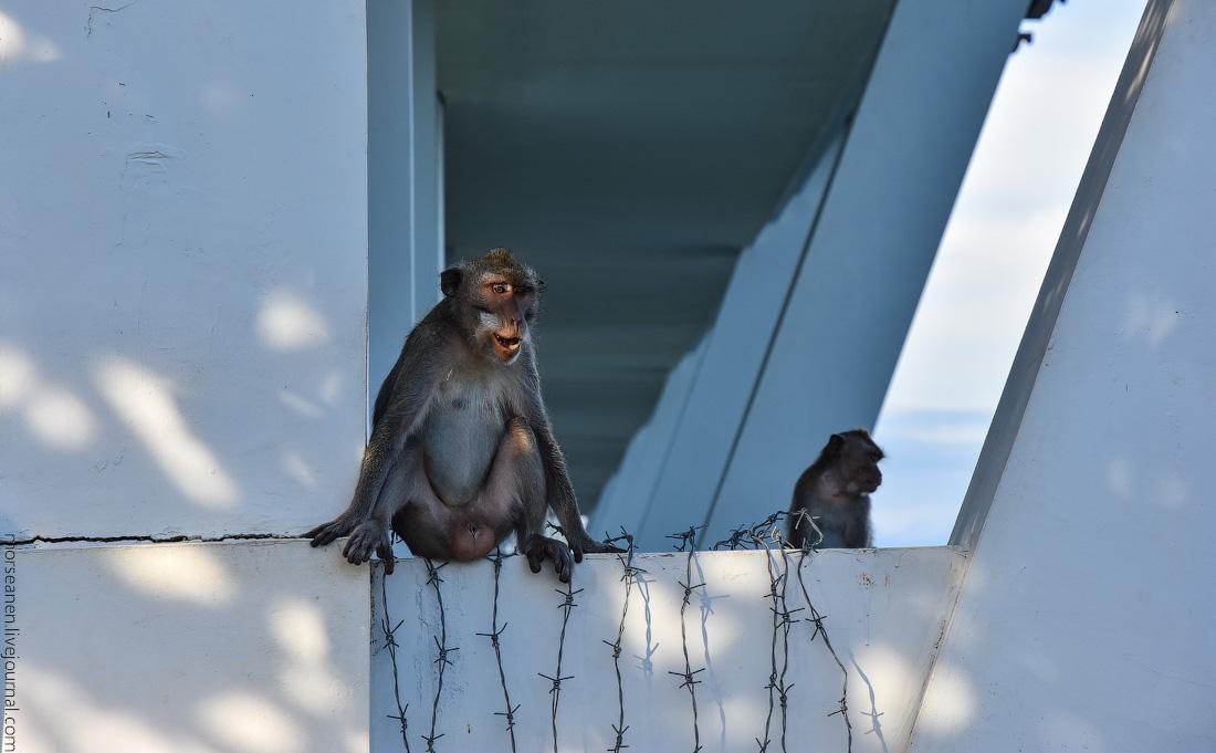 Monkey-Samabe