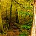 Autumn Stairway