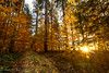 Sunset in the Autumnal Forrest