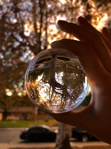 shadowpines sunset tree crystalball reflection