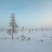 Midwinter light by Fjällkantsbon