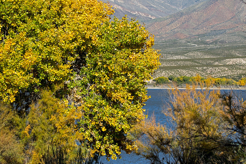 Caballo-View-59-7D2-110718