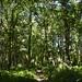 Notton Wood Nature Reserve (87)