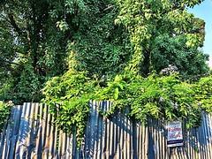 #green #bangkok #urbanhike #dystopianfuture