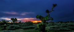 Desert Storm Desert Morning