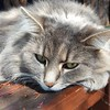 What Sunday mornings are for #sunbathing #catnapping #relaxing Image description: zooming in on a grey long haired cat's face.