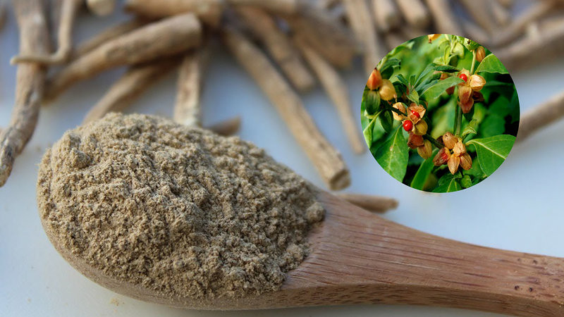 Top 12 Health Benefits of Ashwagandha