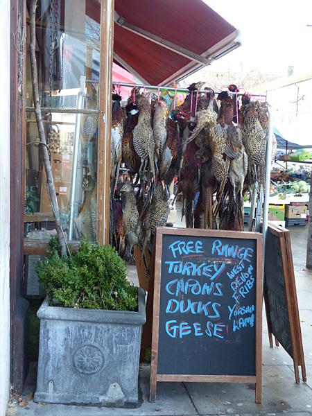 free range geese